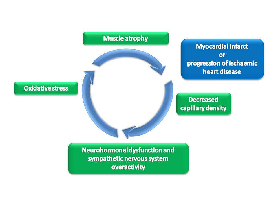 Development-of-skeletal-muscle-dysfunction
