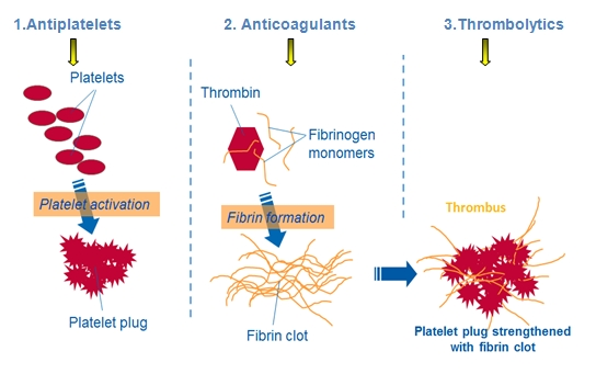 Site_of_action_of_antithrombotics