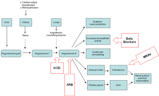 Components-and-effects-of-the-renin-angiotensin-aldosterone-system