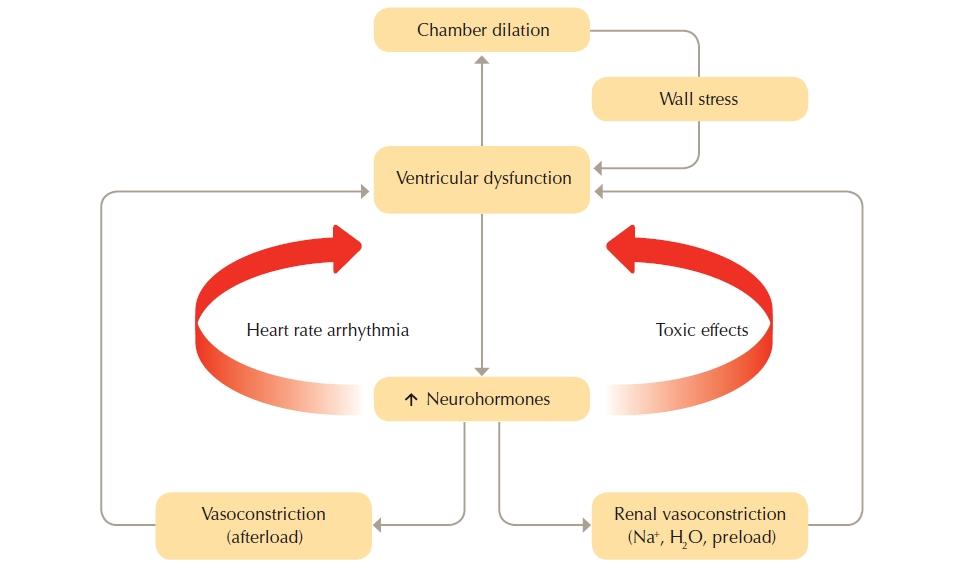 The_vicious_cyle_of_heart_failure_pathophysiology
